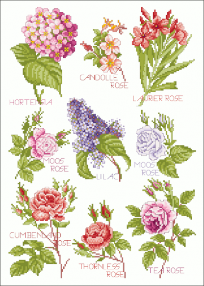 Zählvorlagen, Sommer, Blütenzauber